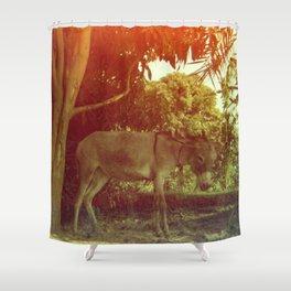 Egyptian Donkey Shower Curtain