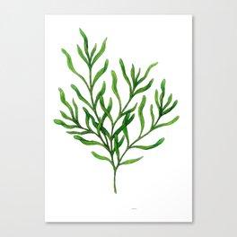 Tarragon Canvas Print