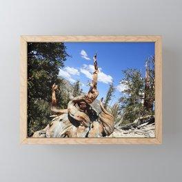 Oldest living things on earth Framed Mini Art Print
