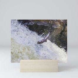 Wild fish atlantic salmon on waterfall leaping Mini Art Print
