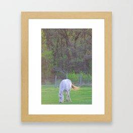 Horse in field Framed Art Print