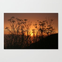 Sunset Over the Fennel Canvas Print