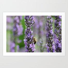 Lavender upick! Art Print