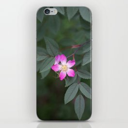 Star Rose iPhone Skin