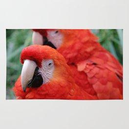 Red Scarlet Macaw Rug