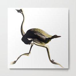 Ostrich Running Metal Print