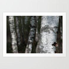 birches II Art Print
