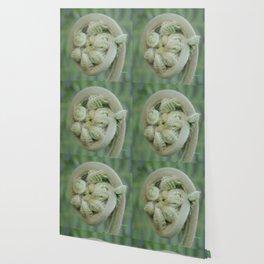 Furled Fern Soon to Unfurl Wallpaper