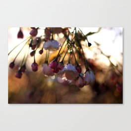 Catch the Morning Light Canvas Print