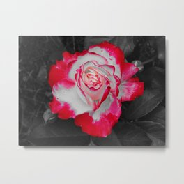 Red and White Rose POP Metal Print