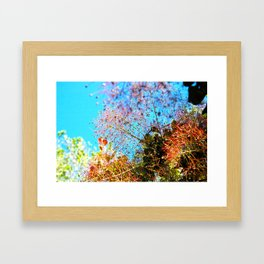Smoke Tree Framed Art Print