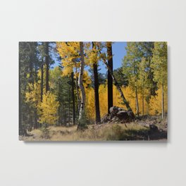High Country Fall Colors Metal Print