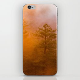 Trees by Zachary Domes iPhone Skin