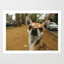 Four eyed Chihuahua?! Art Print