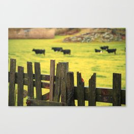 Pasture, fence and cows Canvas Print
