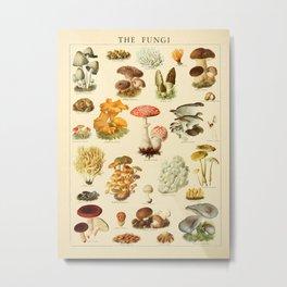Mushrooms Vintage Illustration Metal Print