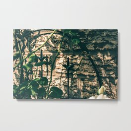 Gloomy afternoon in the garden Metal Print
