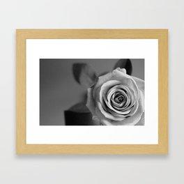 Winter Rose II Framed Art Print