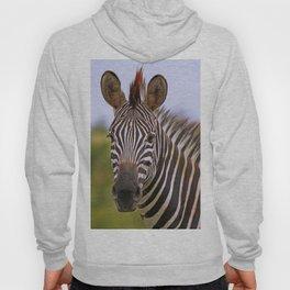 Zebra portrait, Africa wildlife Hoody