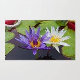 Loving Lotuses Canvas Print