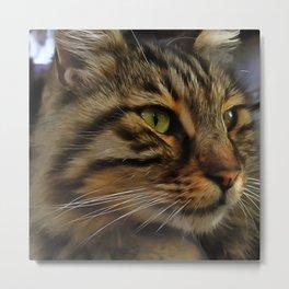 Aslan The Long Haired Tabby Cat Metal Print