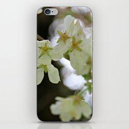 Flowering Plum Tree iPhone Skin