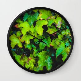 green ivy leaves texture background Wall Clock