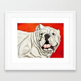 Uga the Bulldog Painting - Red Background Framed Art Print