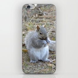 Gray Squirrel Munching on Pine Cones iPhone Skin