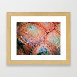Shell Topography Framed Art Print