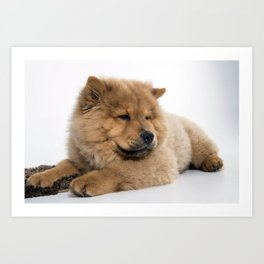 Chow Chow Chilling Art Print