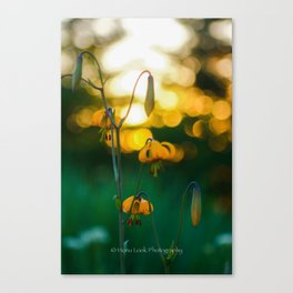 Lilly in the Sun Canvas Print
