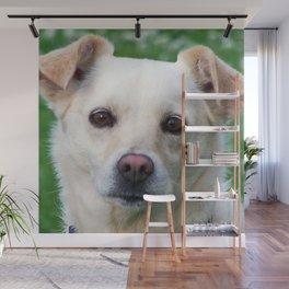 Blond dog portrait Wall Mural
