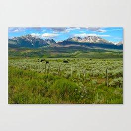 Colorado cattle ranch Canvas Print