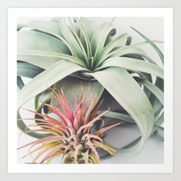 Air Plant Collection III Art Print