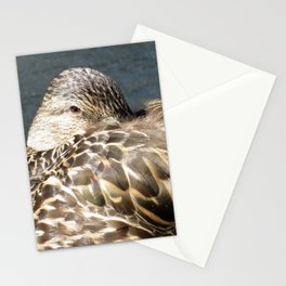 FEMALE MALLARD DUCK - NOSE TUCKED IN Stationery Cards