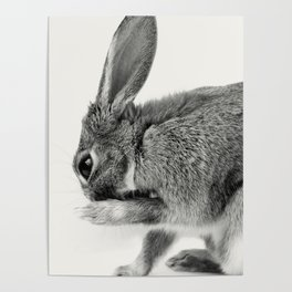 Rabbit Animal Photography Poster