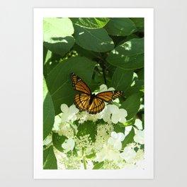 Butterfly in Hydrangea Art Print