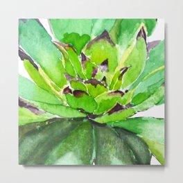 green succulent 3 Metal Print