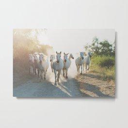Camargue Horses XIII Metal Print