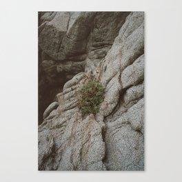 Mexico Mountainside II Canvas Print