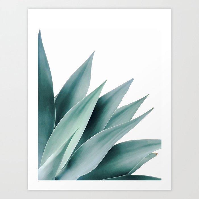 Agave flare II Kunstdrucke