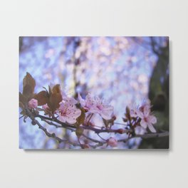 Spring is blossom Metal Print