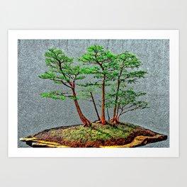 Bonzai Pine Tree Art Print