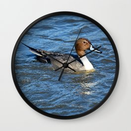 Northern Pintail Duck Wall Clock