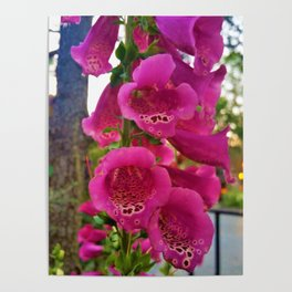 Lovely Pink Flowers 2 Poster