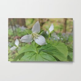 Sweet White Trilliums Metal Print