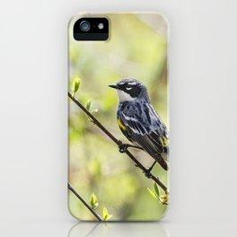 Yellow Rumped Warbler  iPhone Case