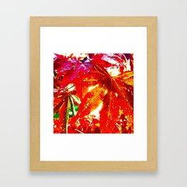 Japanese Maple Dew Framed Art Print