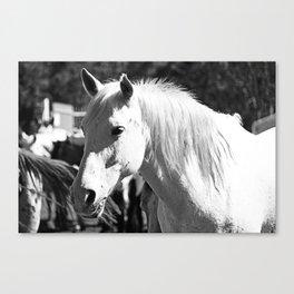White Horse-B&W Canvas Print